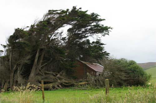 2013 - House covered by trees near Slope Point Road at Catlins, New Zealand