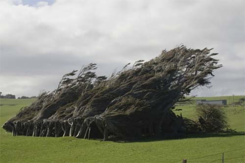2013 - Trees near Slope Point Road at Catlins, New Zealand
