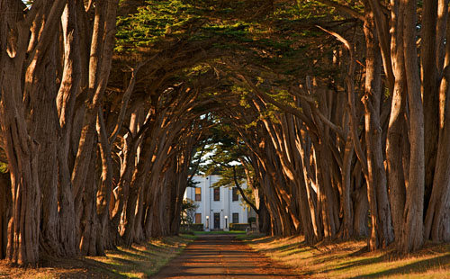 Cypress Tree Avenue at KPH 500