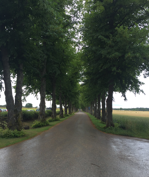 2016 - Road towards Roma kloster on Roma Kungsgård on Gotland (own photo during vacation 2016)